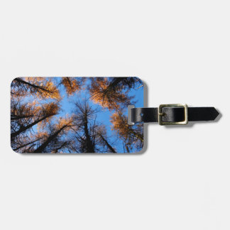 Autumn trees at  sunset luggage tag