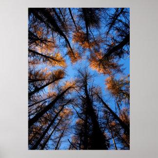 Autumn trees at sunset poster