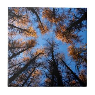 Autumn trees at  sunset tile