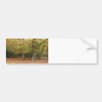 Autumn trees bumper sticker
