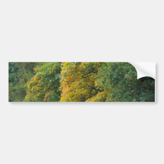 Autumn trees bumper sticker