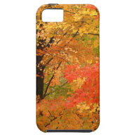 Autumn Trees Forrest iPhone 5 Case
