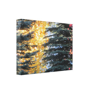 Autumn Trees in Whistler, B.C. Gallery Wrap Canvas