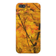 Autumn Trees iPhone 5/5S Covers