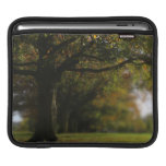 Autumn Trees Landscape Sleeves For iPads