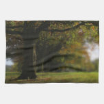 Autumn Trees Landscape Towel