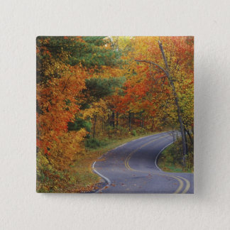 Autumn trees line roadway in Itasca State Park Button