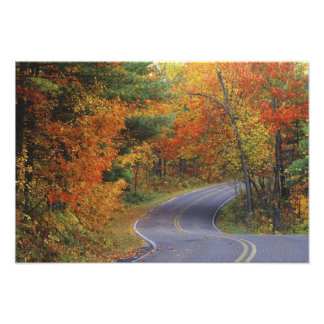 Autumn trees line roadway in Itasca State Park Photo Art