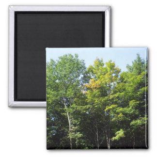 Autumn Trees Magnet