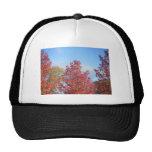 Autumn trees mesh hats