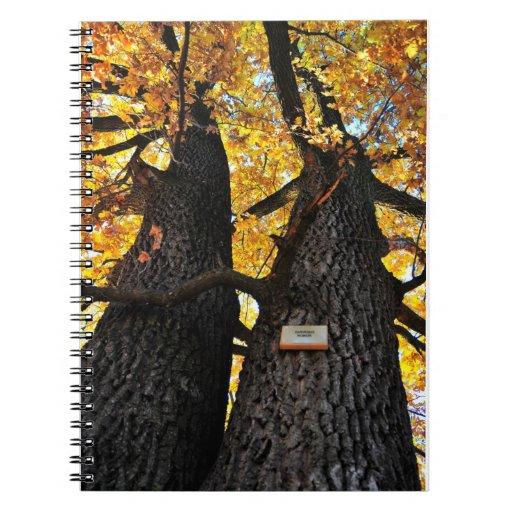 Autumn trees notebooks