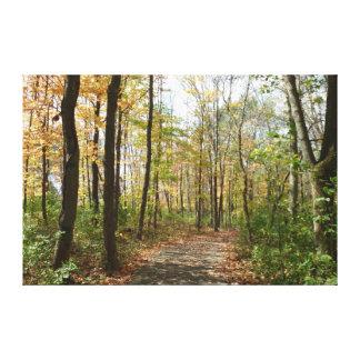 Autumn Trees on Walking Path Large Canvas Print
