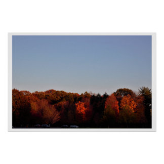 Autumn Trees Photo Poster