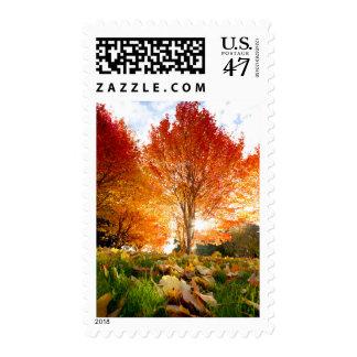 Autumn Trees Postage