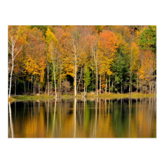 Autumn Trees Reflecting in Pond Postcard