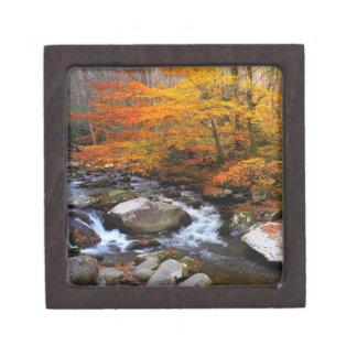 Autumn Trees Smoky Mountains Gift Box Premium Jewelry Box