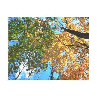 Autumn Treetops Canvas Print