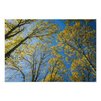 Autumn Treetops Photographic Print