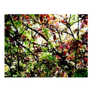 Autumn Underneath Postcard