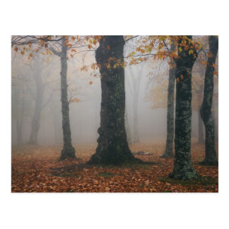Autumn view of foggy forest, Grandfather 2 Postcard