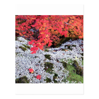 Autumn Vine Maple And Lichens Postcard