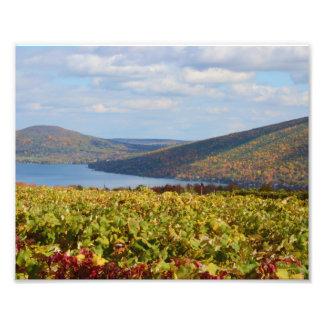 Autumn Vineyard. 1 Photo Print