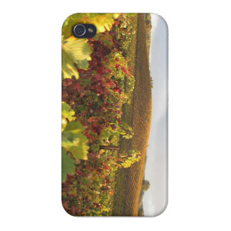 Autumn Vineyards Cover For iPhone 4