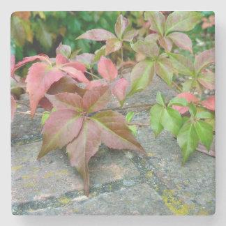 Autumn Virginia Creeper Marble Coaster