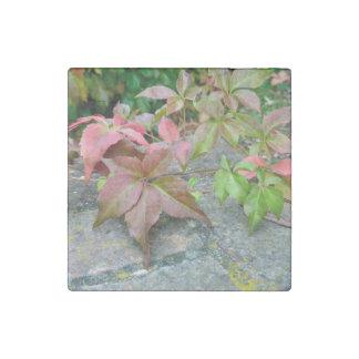 Autumn Virginia Creeper Marble Magnet