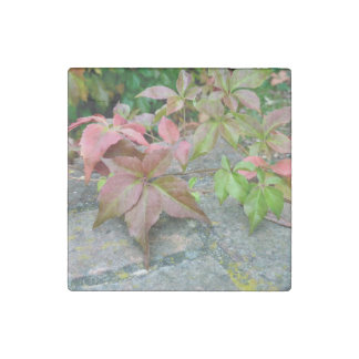 Autumn Virginia Creeper Marble Magnet Stone Magnet