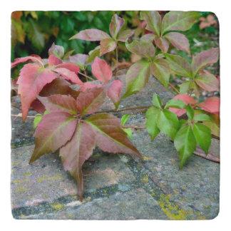 Autumn Virginia Creeper Marble Trivet