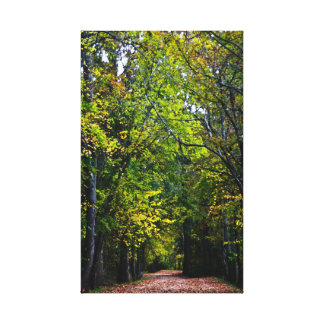 Autumn walk down the country road canvas print