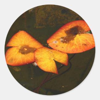 autumn waterlily classic round sticker