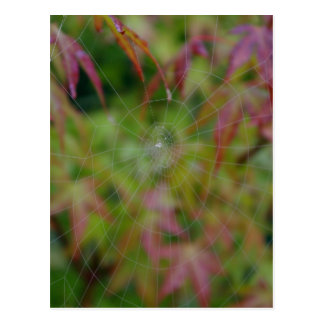 Autumn Web Postcard