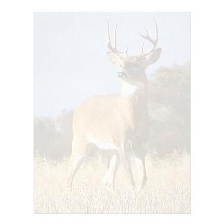 Autumn Whitetail Buck Letterhead
