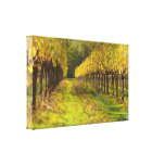 Autumn Wine Vineyard Wrapped Canvas Gallery Wrapped Canvas