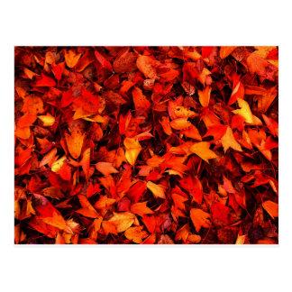 Autumn winter Leafs natural natural  Green Trees E Postcard