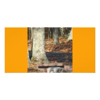 Autumn with tree picture card