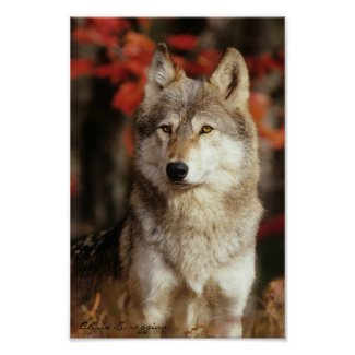 Autumn Wolf Posters