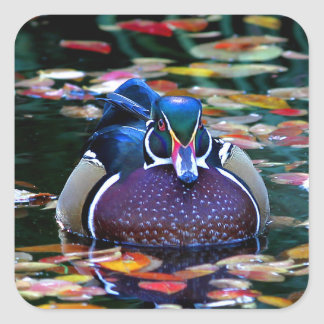 Autumn Wood Duck Reflection Square Sticker