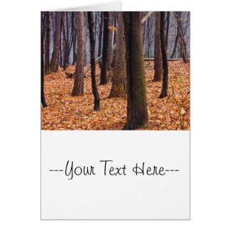 Autumn Woods, Forest Photograph Card