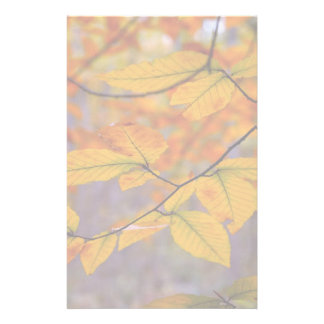 Autumn Yellow Leaves Stationery