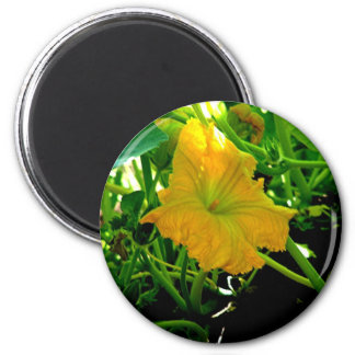 """ Autumn  Yellow Squash Blossom"" 2 Inch Round Magnet"