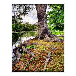 Autumnal Audubon Postcard