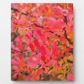 Autumnal colored leaves plaque