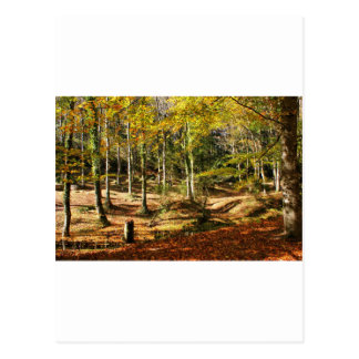 Autumnal colours in Geres Postcard