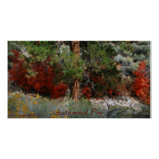 Autumnal Fire Color Photo from Utah Poster