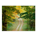 Autumnal Forest Trail East texas Post Card