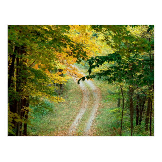 Autumnal Forest Trail East texas Postcard