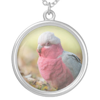 Autumnal Galah Cockatoo round pentants - 3 sizes Round Pendant Necklace